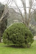 Округлая форма дерева